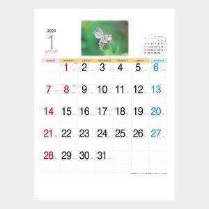 プリティギャラリー(花)